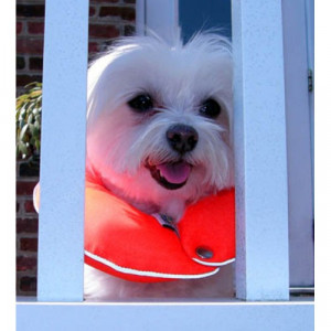 Glow  Reflective Puppy Bumpers - 10 -13""