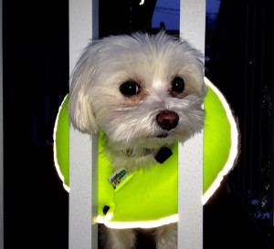 Glow  Reflective Puppy Bumpers - Up to 10""